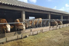 Посета-на-фармери-увозници-на-стелни-јуници-7