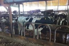 Посета-на-фармери-увозници-на-стелни-јуници-12